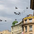 Стрижи и Русские Витязи Петербург (5)